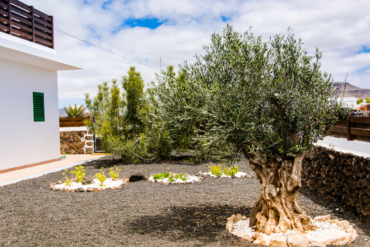 Giardino con ulivo fabulous come abbiamo ricordato for Aiuola con ulivo